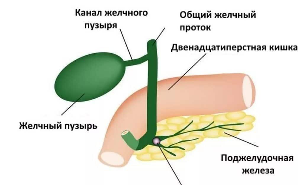Причины возникновения водянки желчного пузыря