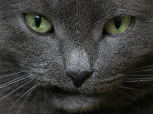 Болезнь кошачьих царапин