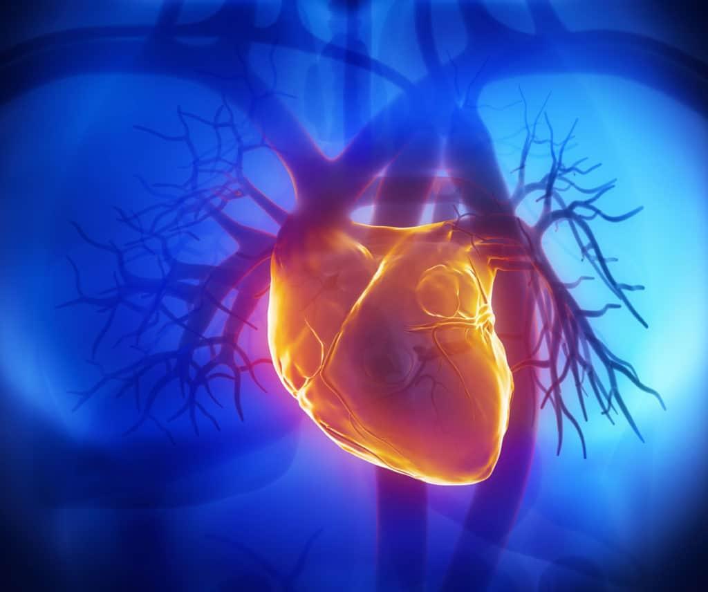 Сердечная мышца