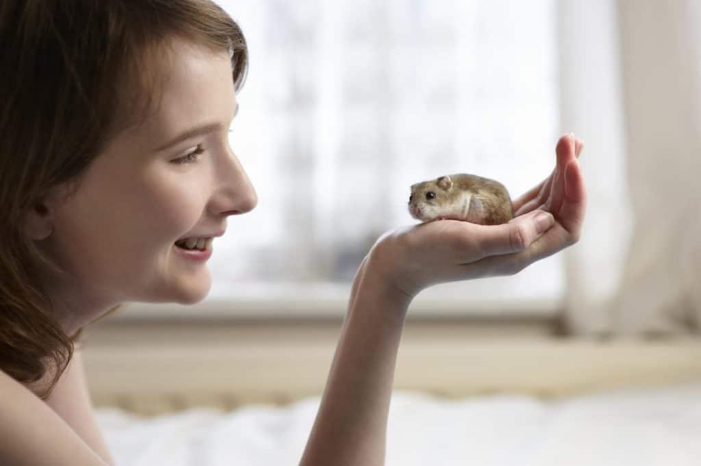 Аллергия на хомяков у детей встречается чаще чем у взрослых