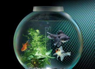 Аллергия на аквариумных рыбок