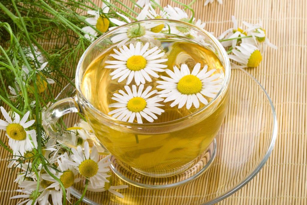 Лекарственные травы - ромашка от боли в горле