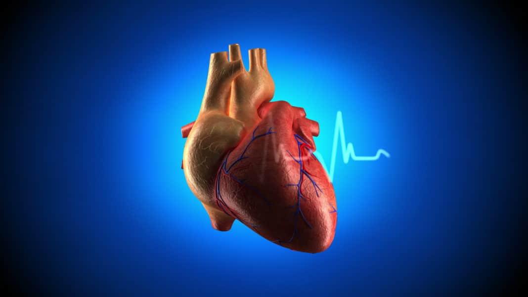 Желудочковая парасистолия — Сердце