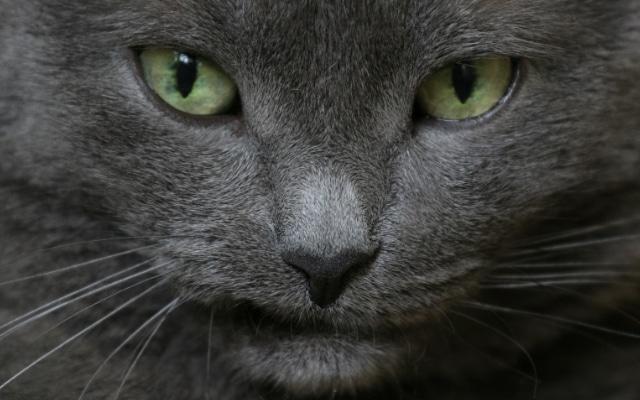 Чем опасна болезнь кошачьих царапин