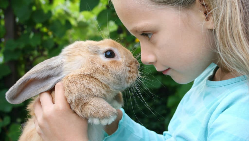 Кролик у ребёнка