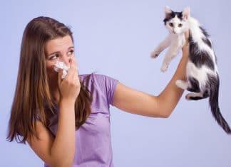 Как избавиться от аллергии на кошек: способы лечения и полезные рекомендации