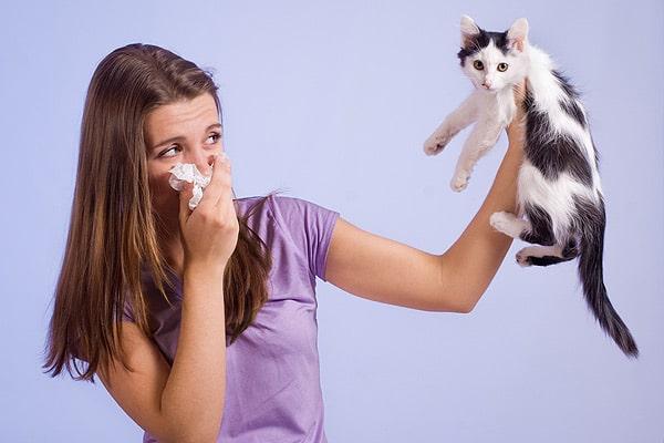 Как проявляется аллергия на кошек у взрослых и детей, как избавиться от нее навсегда