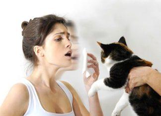 Аллергия на животных: информацию, которую полезно знать
