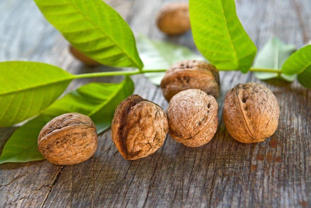 Грецкий орех при диабете