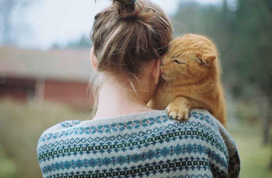 Действительно ли кошка может лечить?