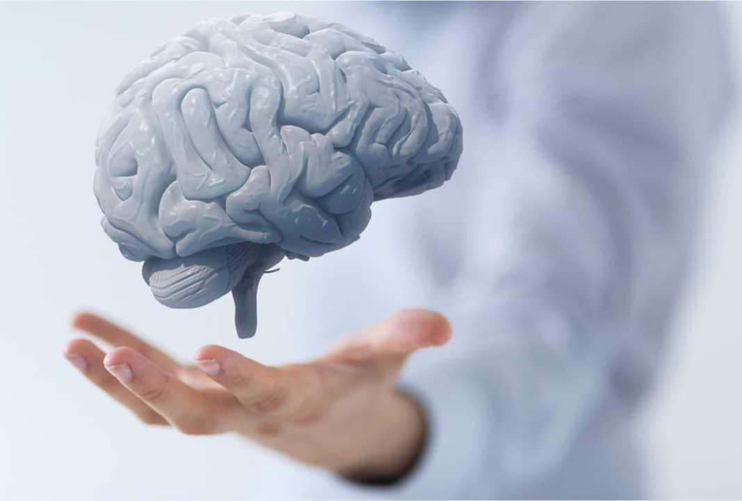 Учёные выяснили, почему мозг стареет
