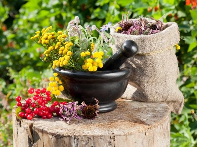 Какие лекарственные растения снижают нормальное давление
