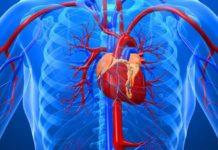 Уплотнение аорты