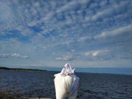 Гигантский зуб в Ладожском озере
